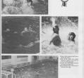 sea-lions-06_0